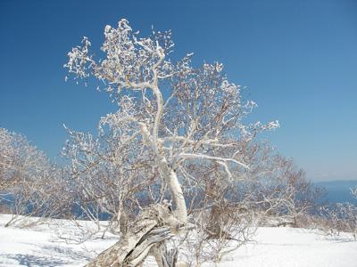 hitokoma2009-419-3.jpg