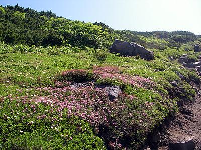 hitokoma2009-810-2.jpg