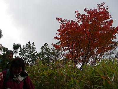 hitokoma2009-927-1.jpg
