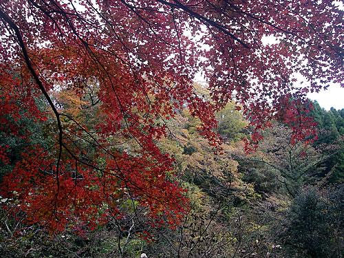 hitokoma2011-1130-4.jpg