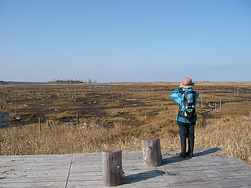 hitokoma2011-114-1.jpg