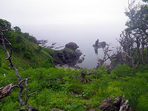 hitokoma2011-617-2.jpg