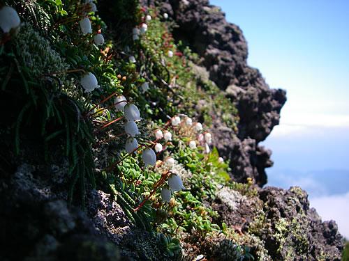 hitokoma2011-721-4.jpg