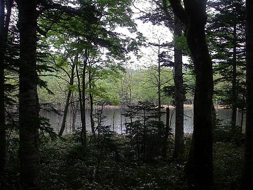 hitokoma2013-615-2.jpg