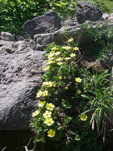hitokoma2013-629-6.jpg