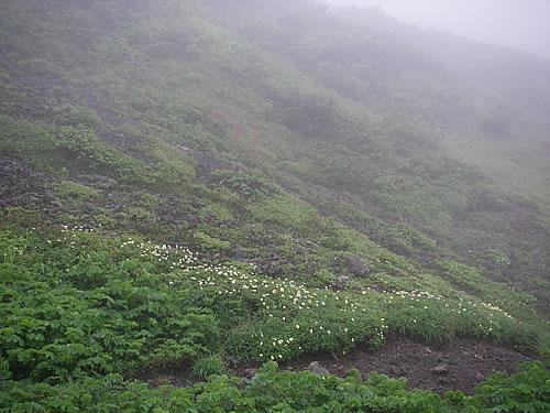 hitokoma2013-813-4.jpg