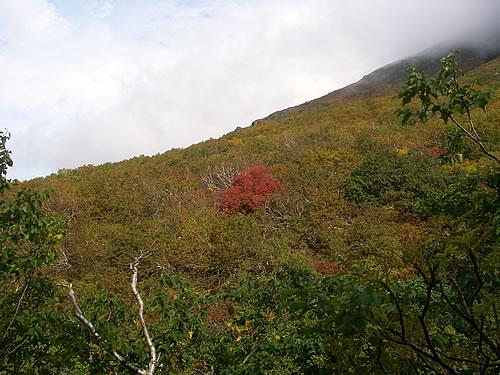 hitokoma2013-929-3.jpg