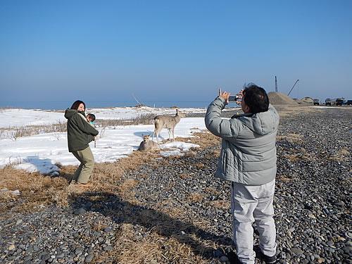 hitokoma2014-31-2.jpg