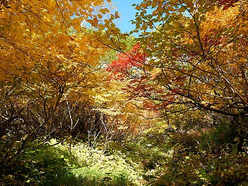 hitokoma2014-930-2.jpg