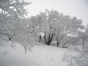 hitokoma413-1.jpg